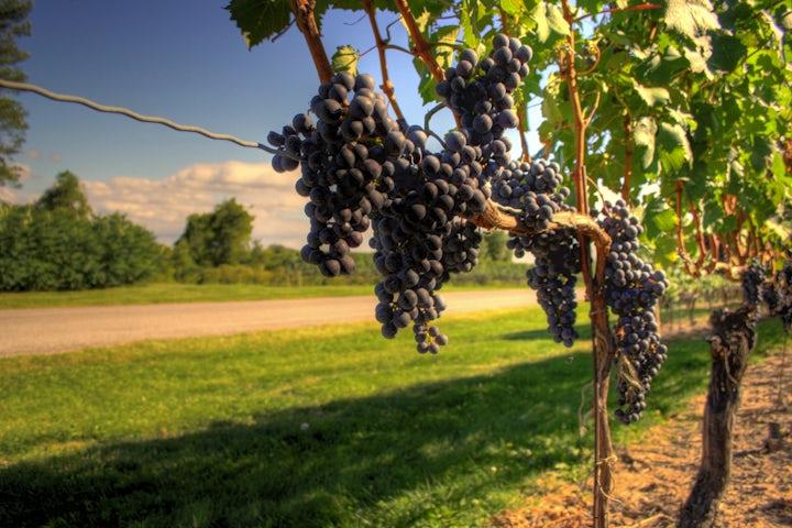 Canadian Jewish community welcomes appeal in Israeli wine labeling case, to seek intervenor status